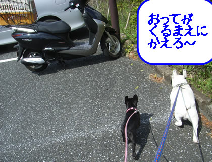 20090422s.jpg