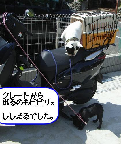 20090422u.jpg