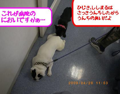 20090428f.jpg